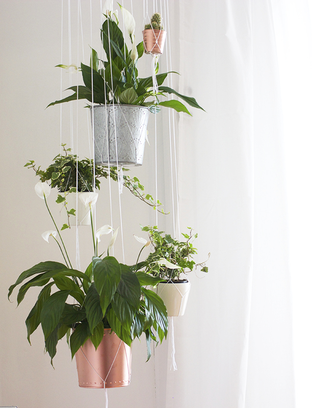 hangingplants